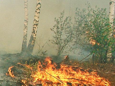 Конкурс пожары в лесу